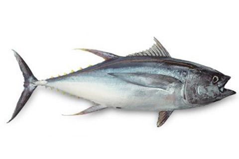 Interview par Marcelle Média de David Sussmann sur l'impact du Covid sur Seafoodia